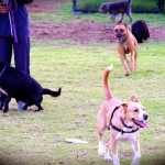 Top local spots to take your dog