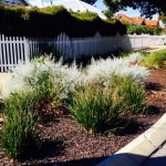 Greening our suburbs: veges on verges